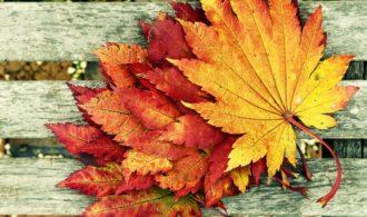 Five surprising Autumn songs